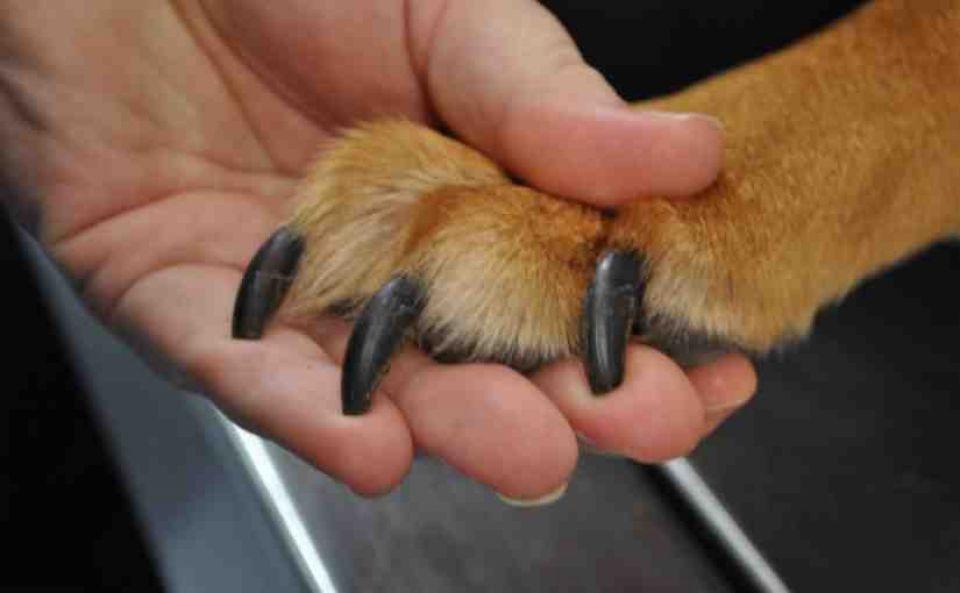 Vistoso Detener El Sangrado De Uñas Perro Cresta - Ideas de Diseño ...