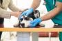Leucemia en perros: síntomas, causas y tratamientos