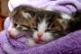 ¿Cómo alimentar gatos recién nacidos?