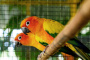 TOP 5 especies de ave con colores más brillantes
