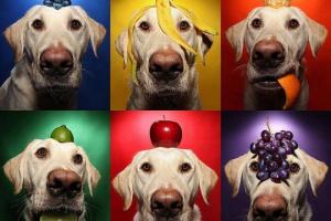 ¿Pueden los perros comer frutas?