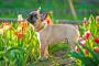 Mantener a su mascota a salvo de las plantas venenosas de la primavera.