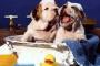 Cómo bañar un perro: útiles suministros y consejos para perros