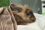 Diagnóstico y prevención de las convulsiones en los conejos