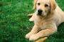 ¿Qué es una dieta saludable para un perro?