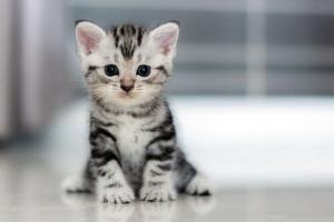 Ansiedad de separación en gatos