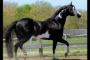 Colitis-X en caballos