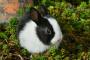 Atención médica de rutina de los conejos