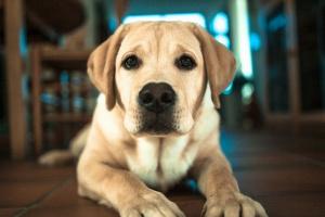 Diferentes tipos de vómitos caninos, y lo que indican