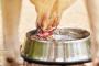Cómo los perros beben agua es todo menos normal
