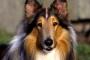 Cómo tratar perros con piel seca