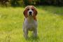 Alimentos tóxicos y peligrosos para mascotas