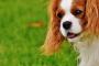 La guía definitiva para comprender el lenguaje corporal del perro (¿Qué dijiste?)