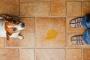 Accidentes de perros: qué hacer cuando su cachorro olvida su orinal