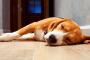 La ciencia comprueba que los perros también tienen malos días de sueño