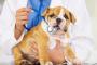 Lea el por qué no debería esterilizar a su mascota en celo