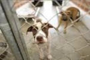 Perros de la perrera en perros