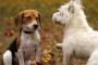 Perros machos contra hembras (una diferencia de personalidad distintiva)