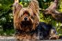 Cómo (por fin) controlar el pelo del perro en su hogar