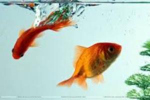 Trastornos del Hueso y los Músculos en peces