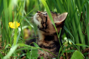 Algunas razones por las cuales su gato está comiendo tierra