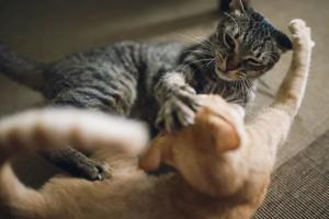 10 tips para parar la agresión entre gatos