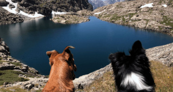 ¿Por qué los perros aullan?