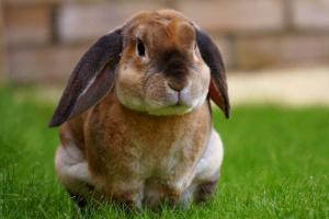 Riesgos de salud comunes y toxinas para mamíferos pequeños