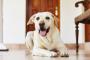 Cómo tratar mejor la artritis en perros.
