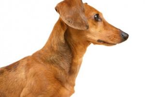 Calvicie y trastornos de la piel relacionados con las hormonas en perros