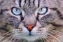 Algunas cosas que solo los dueños de gatos entenderán