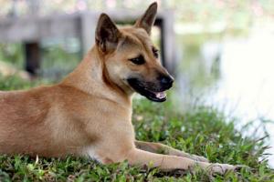 Coagulación sanguínea excesiva en perros