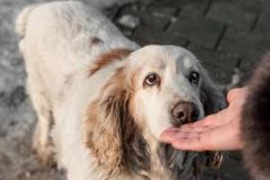 Tumor del útero en perros