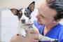 ¿Tu perro necesita la vacuna contra la tos perrera?