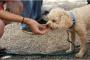 5 alimentos para la gente que nunca debes darle a tu perro