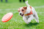 Entrenando a su perro para el trabajo de búsqueda y rescate