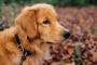 Defecto del septo ventricular en perros
