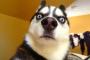 Hinchazón del nervio óptico en perros