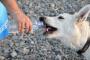 ¿Por qué los perros beben del inodoro?