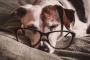 Cuidado de perros mayores: lo que usted necesita saber