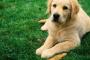 Aumento de la micción y la sed en los perros