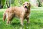 Ehrliquiosis canina: prevención, síntomas y tratamiento