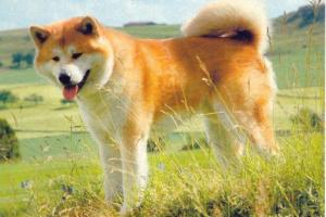 Párpado anormal en perros