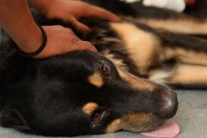 Hidronefrosis en perros: síntomas, causas y tratamientos.