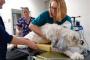 Cáncer Canino: Tumores Vaginales y Vulvares