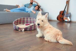 6 productos de limpieza del hogar que no son seguros para perros