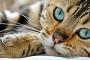 Pensar fuera del cajón de arena: resolver el moqueo felino