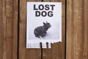 7 estafas que podrían hacerte perder a tu perro.