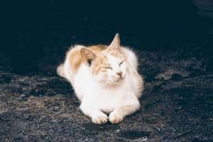 Cómo detectar los primeros signos de enfermedad en los gatos