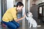 El mes del entrenar a tu perro es en enero, esto es lo que necesita saber.